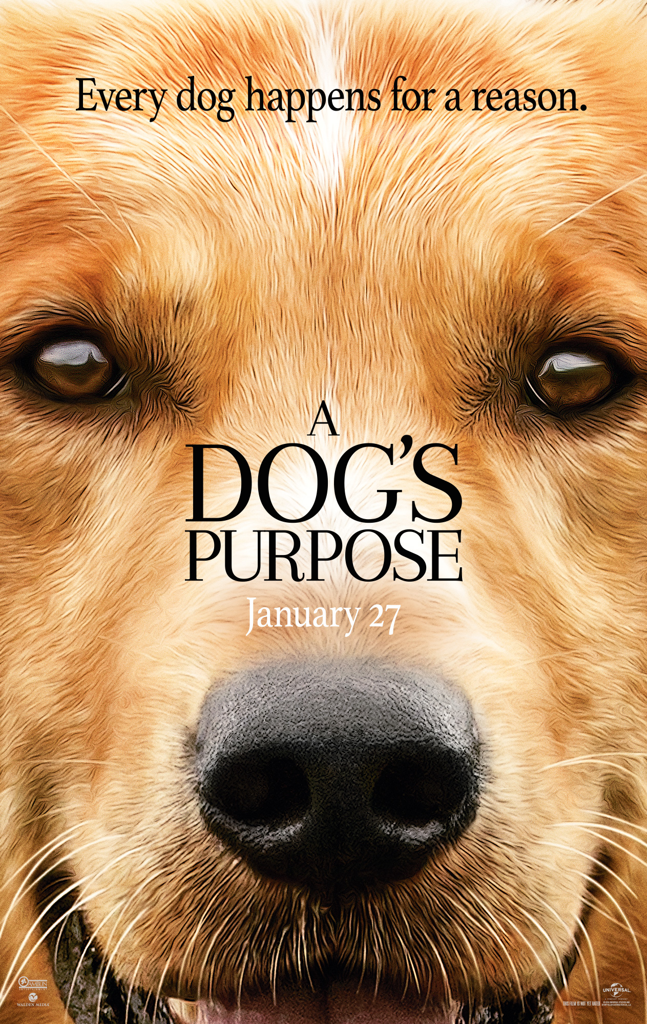 1-month BarkBox Gift Card ($35) Copy of the movie tie-in book A Dog's Purpose Calendar, Bandana, T-Shirt, Tennis Ball Launcher, and Frisbee